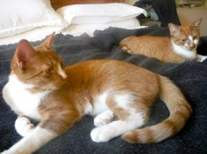 My sister Ginger's two new kitties, Loki and Thor, chillin' in Dupont Circle.